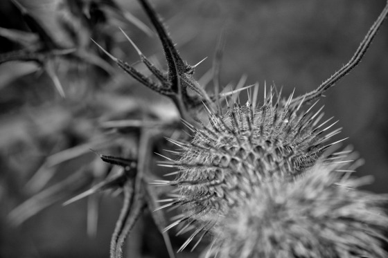 Prickly....