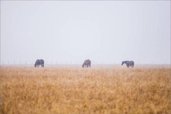 Prairie - 2014 © Christopher Martin